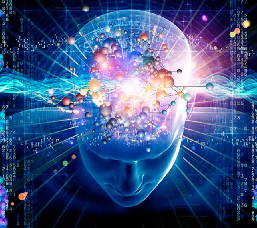 Cognitive Neuroscience and Neurobiology Luis De Garrido